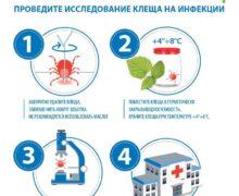 Если вас укусил клещ, проведите исследование клеща на инфекции