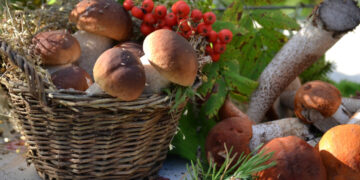 Информация о профилактике отравлений грибами, правилах сбора и заготовки грибов, профилактике ботулизма